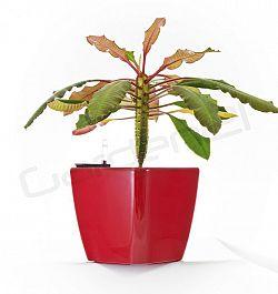 Samozavlažovací květináč G21 Cube červený 22cm
