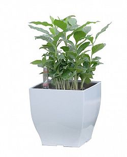 Samozavlažovací květináč G21 Cube mini bílý 13.5cm