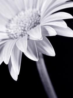 Obraz na zeď Roxy - Sunflower 30x40 cm