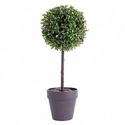 Buxusový strom v květináči černá