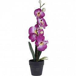 Orchidej v květináči růžová, 38 cm