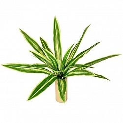 Umělá květina Neoreglie, pr. 60 cm