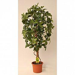 Umělý strom Schefflera Exclusive v květináči, 120 cm