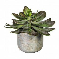 Rostlina Umělá Echeveria I