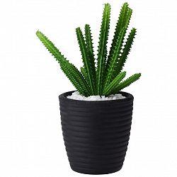 Rostlina Umělá Kaktus