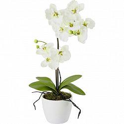 Rostlina Umělá Orchidee