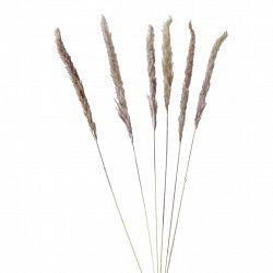 Umělá Rostlina Pampová Tráva, V: 85cm