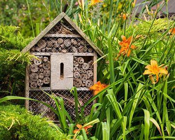 Jak vyrobit hotel pro hmyz, včely a mravence