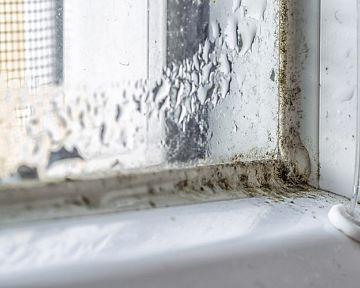 Jak se zbavit plísně v koupelně na silikonu? Přípravek proti plísni bez chloru pomůže