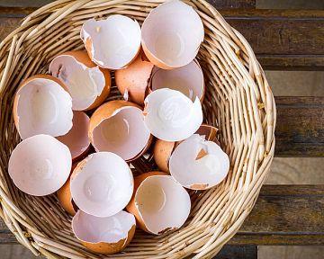 Jak využít skořápky z vajec? Na zahradě do kompostu a na květy jako hnojivo