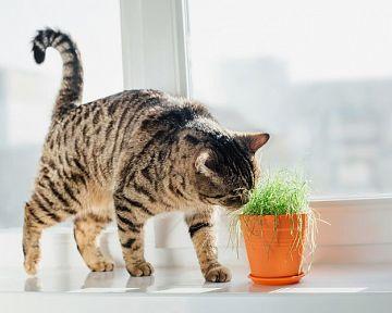 Jedovaté rostliny pro kočky. Je Aloe Vera nevhodná?