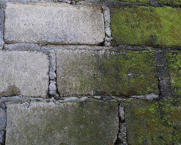 Jak odstranit mech z betonu a zámkové dlažby? Pomůže postřik Mechožrout
