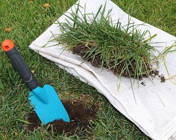Obnova trávníku na jaře: Hnojení, vertikulace, výsev, choroby trávníku