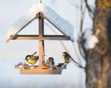 Jak vyrobit krmení či krmítko pro ptáky? Poradíme, co dát jíst ptáčkům v zimě!